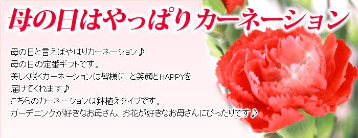 母の日プレゼント 花プレゼント