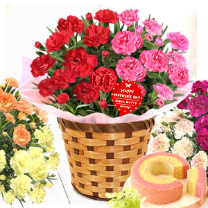 母の日のプレゼント ≪早い者勝ち≫2色植えカーネーション&スイーツ!