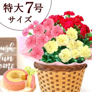 母の日のプレゼント 3色MIXのカーネーション鉢植え(7号鉢)&苺ミニバウム
