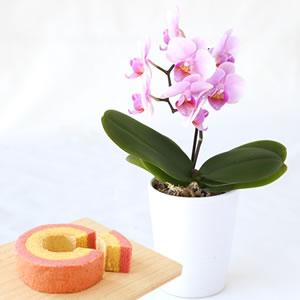 ミディ胡蝶蘭ココロ&苺ミニバウムクーヘンセット
