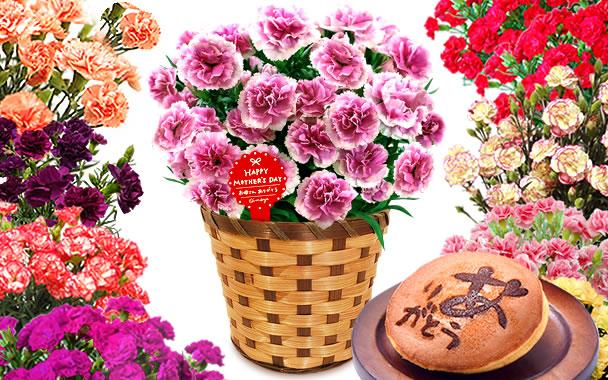 鉢花カーネーション