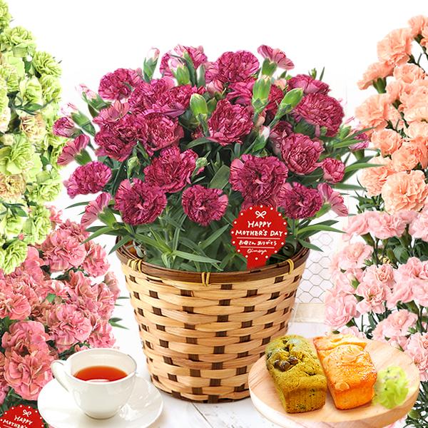 母の日のプレゼント 3色のモダンカーネーション鉢植え&パウンドケーキ