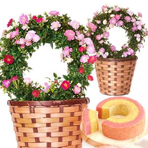 母の日のプレゼント ミニチュアローズ鉢植え&シフォンケーキ