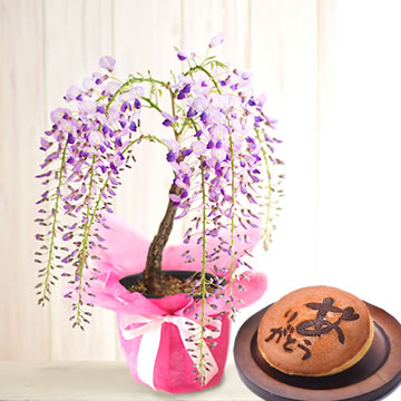 母の日のプレゼント 一才藤の盆栽&和菓子
