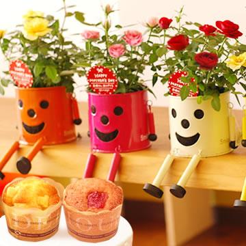 母の日のプレゼント ブリキマンポットとミニ薔薇&カップケーキ