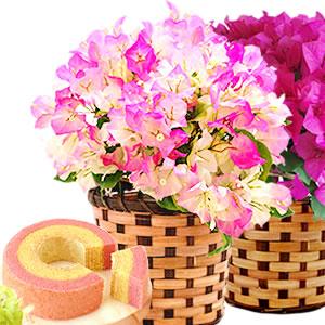 母の日のプレゼント ブーゲンビリア鉢植え&シフォンケーキセット