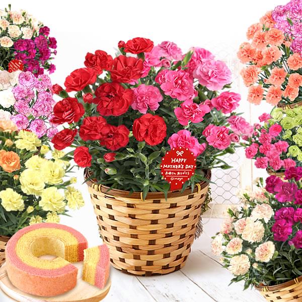 母の日のプレゼント 2色寄せ植えカーネーション&洋菓子