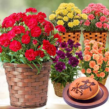 母の日のプレゼント カーネション鉢植えと和菓子セット