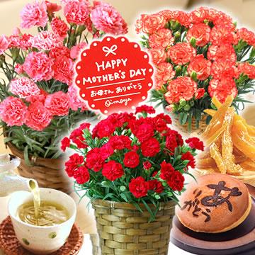 母の日のプレゼント カーネーション鉢植えと干し芋&どら焼きセット