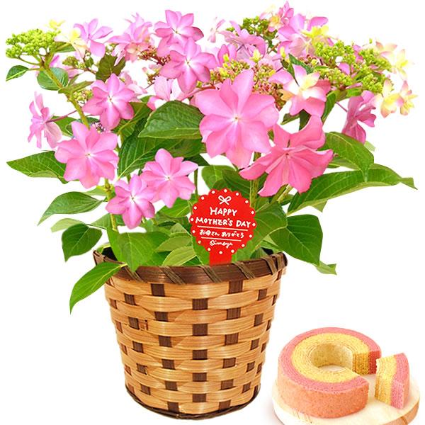 母の日のプレゼント 紫陽花