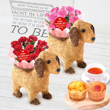 母の日のプレゼント カーネーションわんちゃん(茶)&カップケーキセット