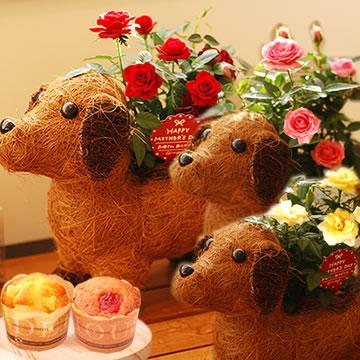 母の日のプレゼント 薔薇わんちゃん(茶)&カップケーキセット