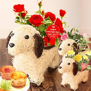 母の日のプレゼント 薔薇わんちゃん(白)&カップケーキセット