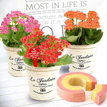 母の日のプレゼント 3号鉢のカランコエ&2色バウムクーヘン
