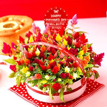 母の日のプレゼント ケイトウ&シフォンケーキセット