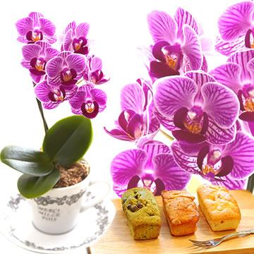 母の日のプレゼント ティーカップ入りミニ胡蝶蘭&3種のパウンドケーキ
