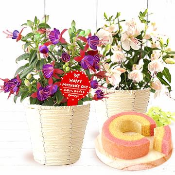 母の日のプレゼント 3.5号鉢プーニーの鉢植え&シフォンケーキ