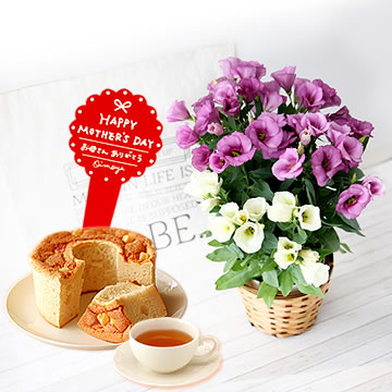 母の日のプレゼント 上品で華やかなトルコキキョウ&シフォンケーキセット