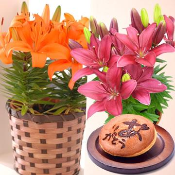 母の日のプレゼント ユリの鉢植え&どら焼きセット