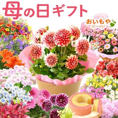 無料 日 母 送料 の 花 【公式】フラワーファーム 花の宅配
